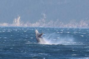 Whale-close